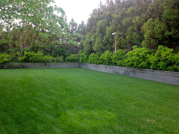 Lawn After Design