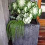 Container Gardens & Planters – Image 1
