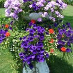 Container Gardens & Planters – Image 15