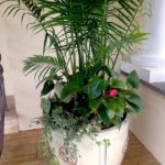 Container Gardens & Planters – Image 18