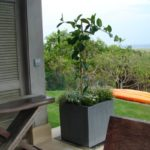 Container Gardens & Planters – Image 6