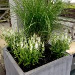 Container Gardens & Planters – Image 8